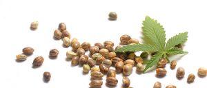 semena-konoplje